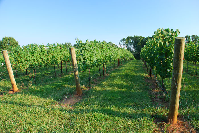Welcome to Cellar 4201 Vineyard in the Yadkin Valley of NC ...